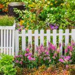 12 Tanaman Rambat untuk Mempercantik Teras Rumah
