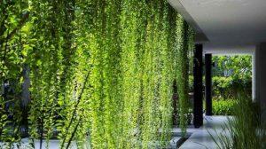 7 tanaman rambat cantik yang menyejukkan rumah