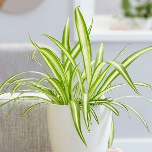 9 tanaman indoor yang buat ruangan lebih sejuk