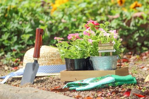 membersihkan taman rumah