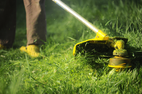 Memotong Rumput Rumah