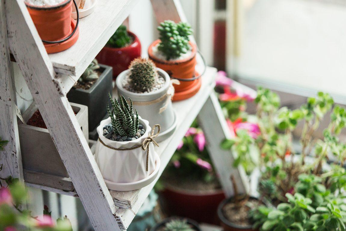 Ide Aktivitas di Rumah dengan Berkebun Indoor