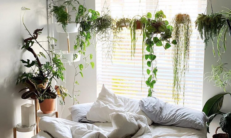 DIY tanaman indoor