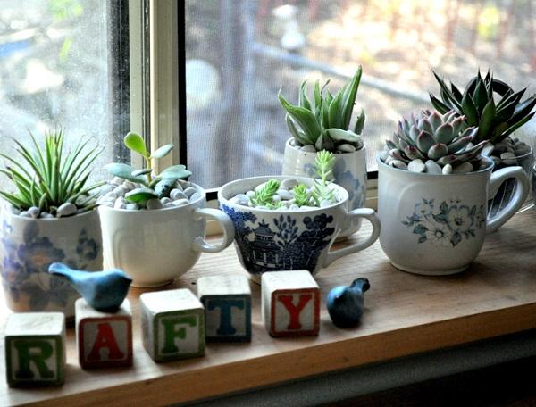 Dekorasi tanaman di rumah