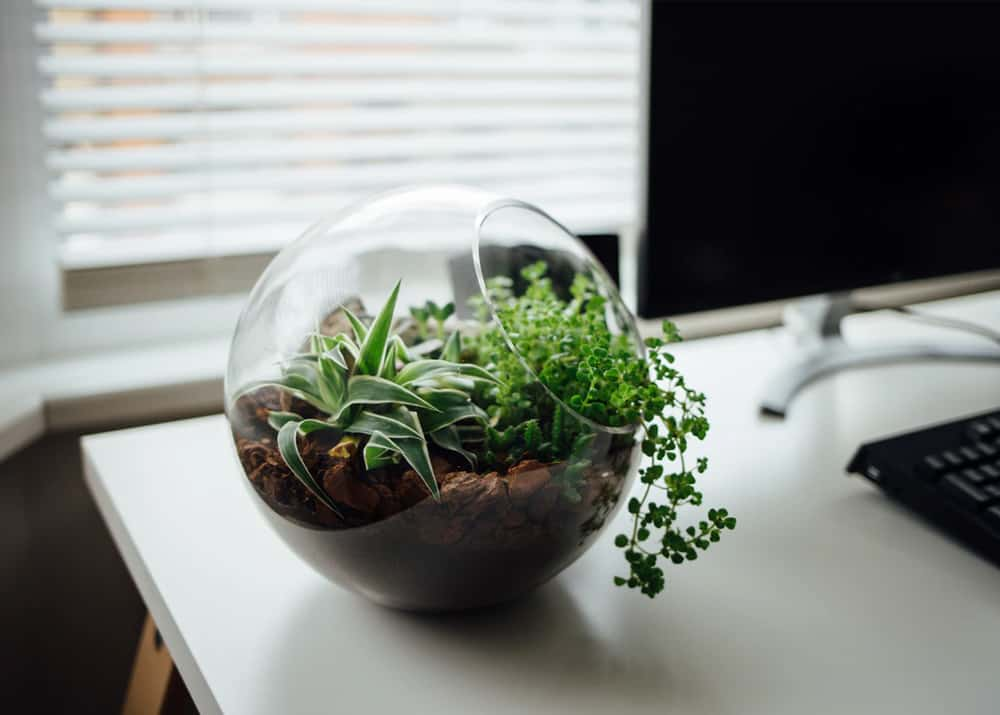 terrarium tanaman