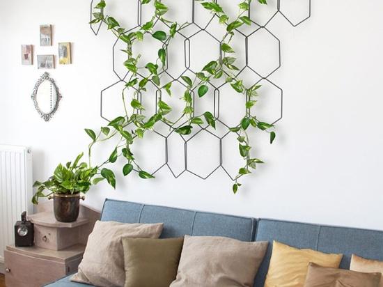dekorasi tanaman rambat