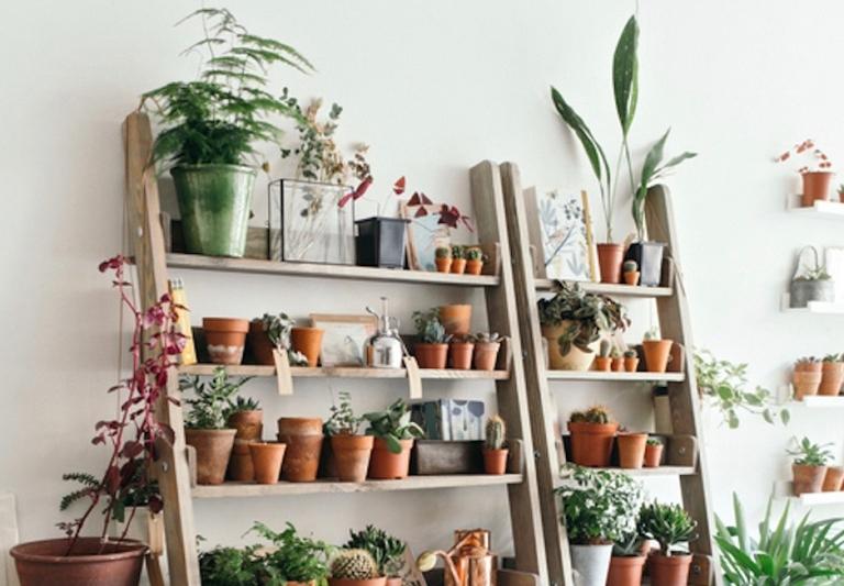 DIY tanaman indoor tangga