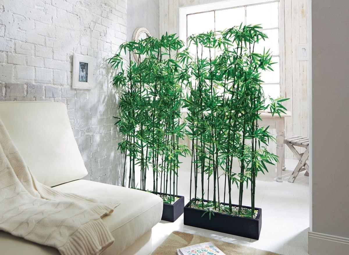 tanaman dalam rumah sekat ruangan