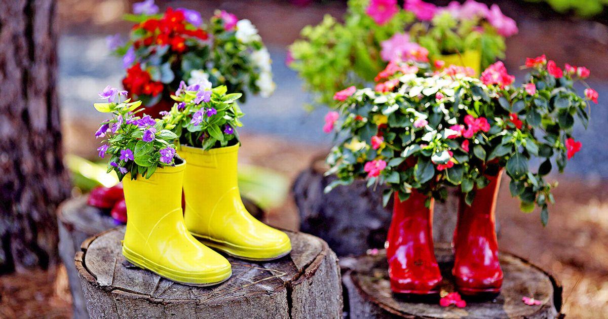 pot bunga dari sepatu boots