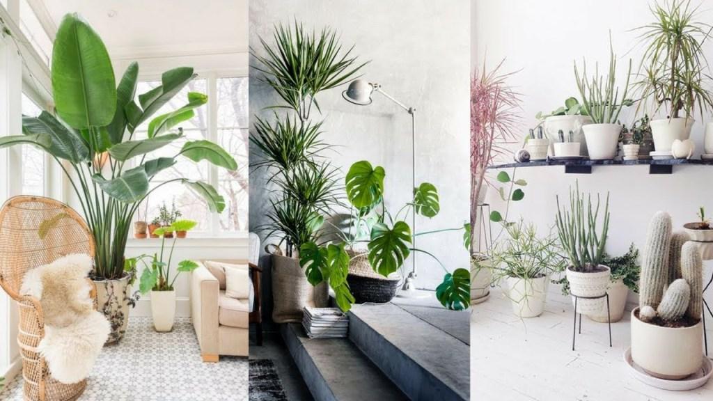 Tambahkan tanaman interior musim panas